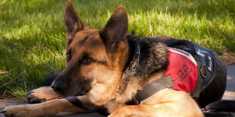 Service Animals in the Workplace | OKC Benefits Agency Image